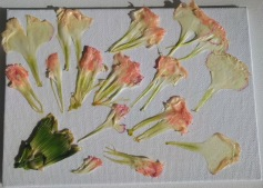 Carnation Petal Painting Trial 1