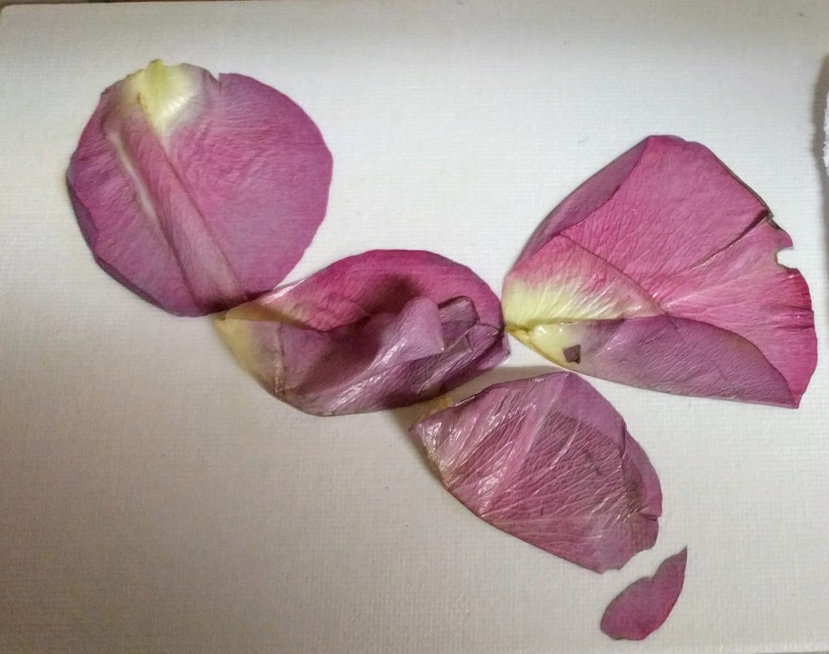 Rose Petal Painting Trial 2